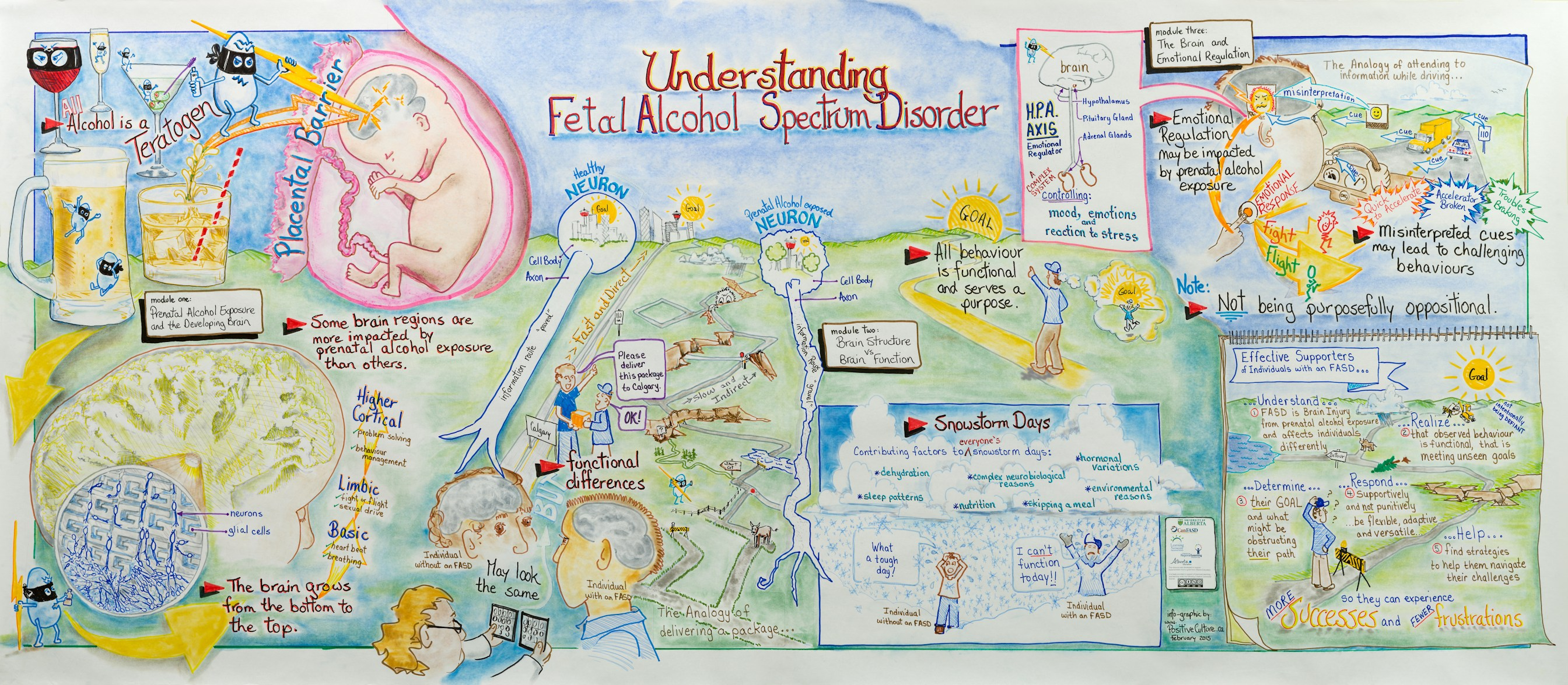 Understanding Fetal Alcohol Spectrum Disorder - a graphic teaching mural